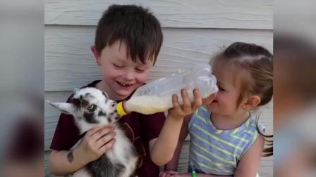 最佳搞笑动物和婴儿编纂-搞笑婴儿视频