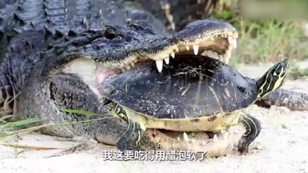 配音恶搞鳄鱼与王八, 笑的不行了(下)