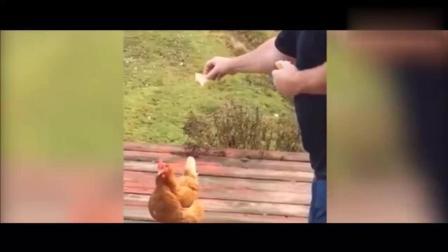 看完视频我怀疑自己养的是假宠物, 搞笑动物宠物