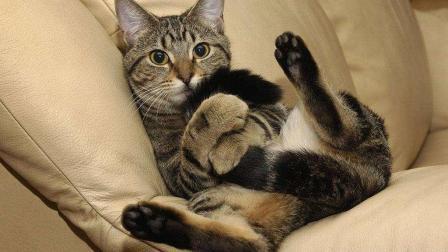 搞笑动物: 这些猫咪怕是要成精了吧, 主人不在家
