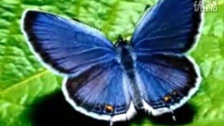 《蝴蝶与藍》 心灵慰藉音乐 画音欣赏  古筝曲 集欣赏与太极背景音乐的純音乐 精彩視频及太极背景音乐