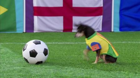 世界杯怎么能少得了狗狗们呢