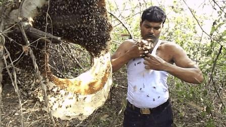 印度男子被蜜蜂蛰300下, 竟毫无感觉, 号称喝杯茶就没事了!