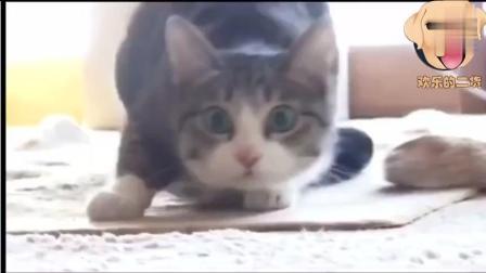 反正这猫太搞笑了, 搞笑动物短片