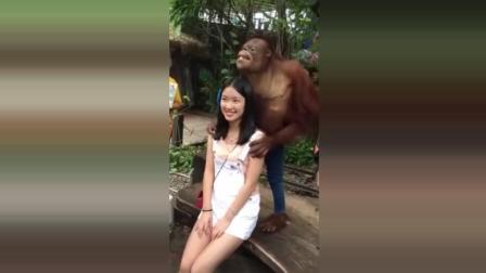 猴子搞笑视频合辑, 猴子也好色
