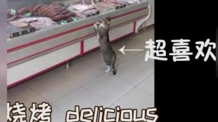 恶搞翻译: 国外1只流浪猫去肉店, 被店主热情接待