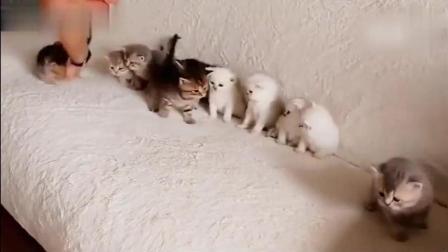 给10只小奶猫拍照到底有多难, 还是算了吧