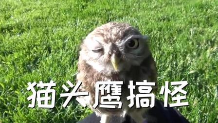百秒笑吧05期 搞笑动物向你抛媚眼, 超级搞笑视频