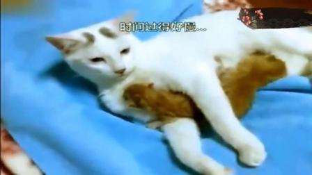 爆笑 猫咪第一次当妈, 完全不知道该怎么办, 整个