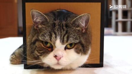 超级乖的猫咪, 怎么捏也一动不动