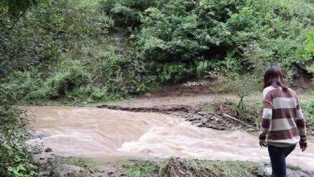 实拍甘肃农村大雨过后 洪水气势汹汹  好多年没见过 看着吓人