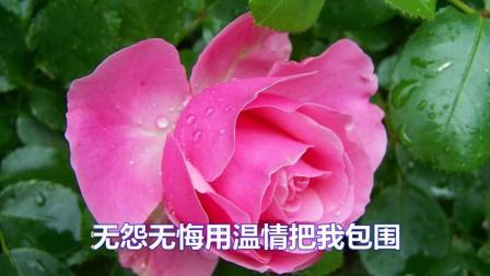 望海高歌一首伤感情歌《心灵的玫瑰》好听极了