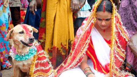 印度奇葩风俗, 要少女和狗结婚, 却说是为了女孩