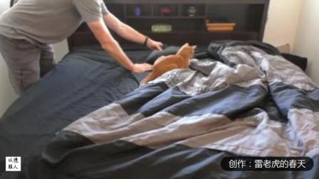 搞笑视频-和猫一起躺在床上是一场非常有趣的斗
