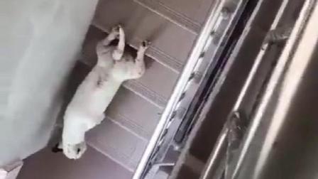 【搞笑小视频】狗子, 你这偷偷摸摸的是要干啥呢