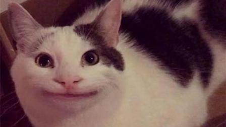 无聊时给猫P了个假笑没想到火了, 好魔性, 堪称喵