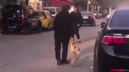 奶奶遛狗的新方法, 狗子: 算了, 我不是很想出去