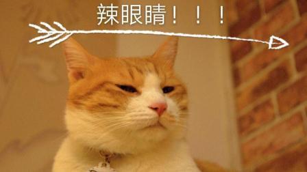 猫咪经常情绪不稳定可能是因为这个原因