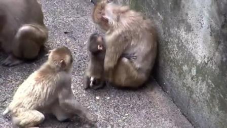 猴妈妈与猴宝宝搞笑视频