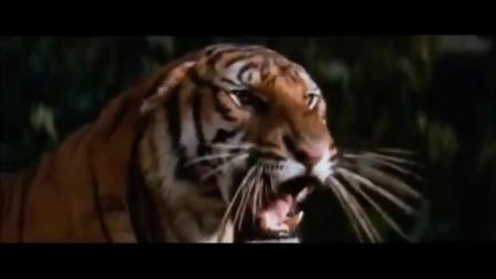狗狗为了救小主人, 与老虎疯狂厮杀, 森林之王见