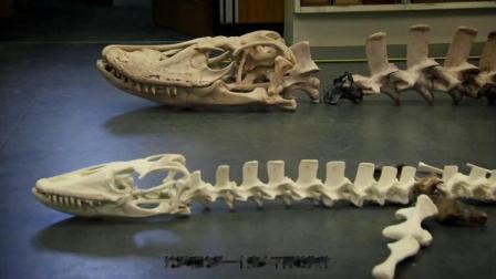 小伙用蜥蜴化石碎片,拼出远古时代的蜥蜴形状