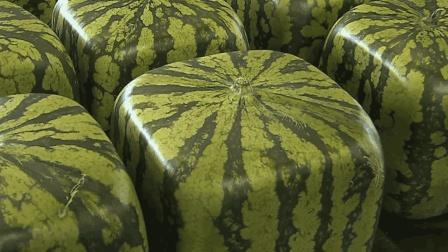 方形西瓜在日本能卖好几万? 有人买回来切开后, 有点懵