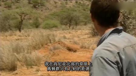 贝爷超近距离遭遇狮群, 摄影师吓得手都抖了!
