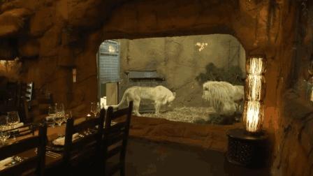 最特别的动物酒店, 和老虎狮子只隔着一层玻璃, 不怕撞破玻璃吗