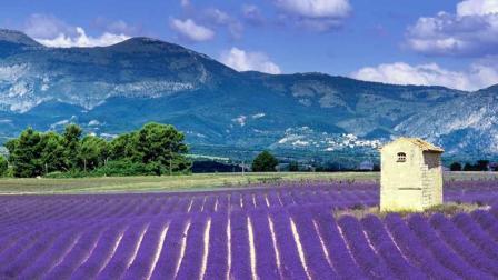 法国小镇被薰衣草包围, 隔着屏幕都闻到花香, 来这烦恼全都忘了!