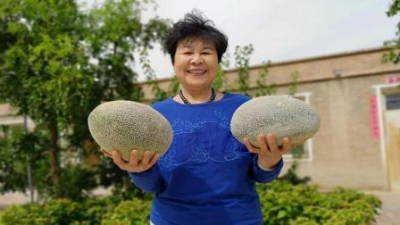 新疆李奶奶摘哈密瓜送福利, 切一个当场试吃, 大姐直呼好吃!