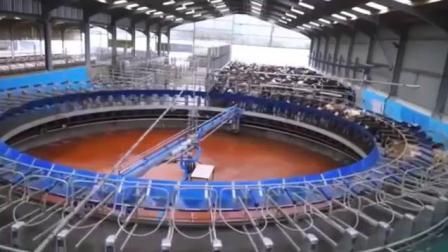 高科技农业,解放双手全自动养殖展示。养殖兔牛羊科学养殖视频