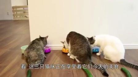 男子把黄瓜偷偷的放在猫咪身后, 结果猫咪看到后