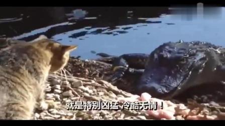 当鳄鱼遇上猫, 艾玛  这猫太生猛了