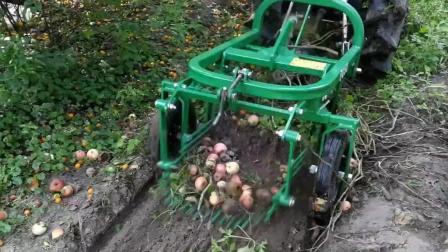 国外小伙用拖拉机挖土豆, 机械化效率就是高!