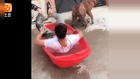 搞笑动物  不要硬拉着可爱的汪星人狗狗去洗澡