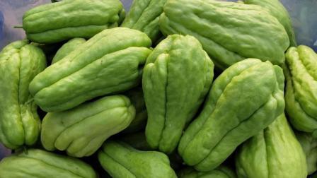 农村这种佛手瓜, 产量特别好, 种一棵一年都吃不完, 你见过吗
