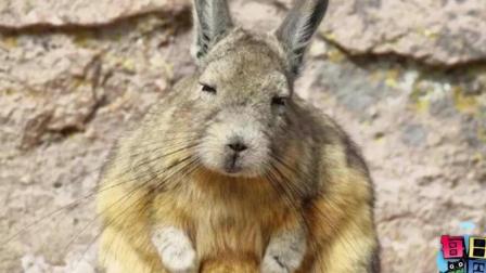 才发现兔子这种生物 逗比起来也是无药可救的