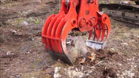 用液压粉碎钳拔树桩, 过程看着好暴力!