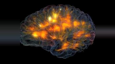 科学家用量子计算机模拟大脑神经信号的动态影