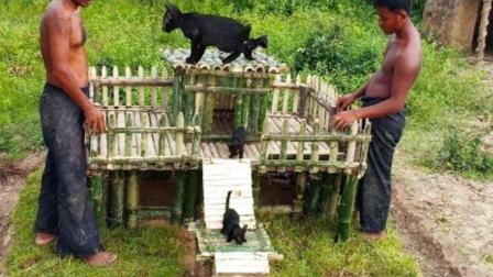 农村哥俩户外独居, 为流浪猫修建一个户外别墅