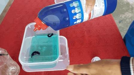 吸食血液令人讨厌的水蛭, 遇到洁厕灵会发生什么? 网友: 我也是服了!