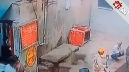 印度耍蛇人表演 猴哥突然窜出2秒不到掳走蛇
