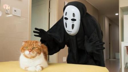 奇葩男子扮无脸怪吓猫咪, 接下来画面千万憋住别笑, 镜头拍下全过程!