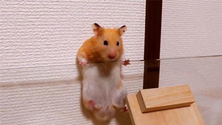你绝不能小看一个吃货的实力, 小仓鼠也是够拼的