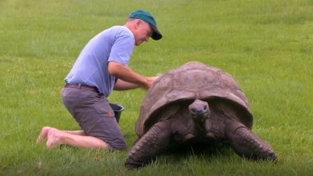 英国神龟出生于18世纪, 经历两次世界大战, 熬死了九代主人!