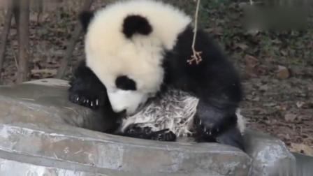 熊猫宝宝这小池子装不下你, 赶紧起来水都溢出来