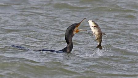 这货吃东西从来不吐骨头的, 请问: 鱼是什么味呢?