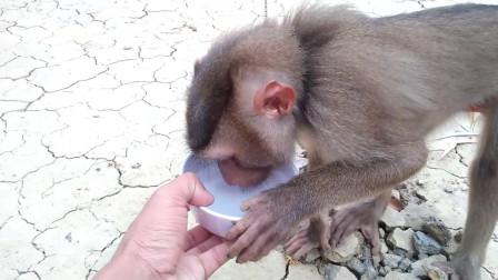 主人为小猴子准备吃的, 小猴子吃的样子, 超萌超可爱!