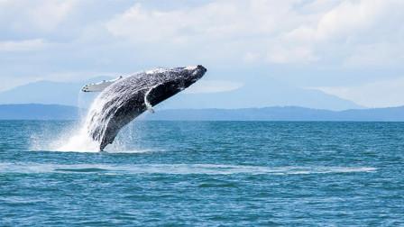 为何鲸鱼下潜到2000米深没事, 而钢铁打造的核潜艇会被压扁?