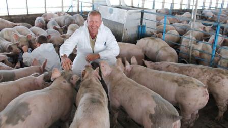 美国为何是养猪第一大国, 而不是中国呢? 他们的猪粪问题咋解的?